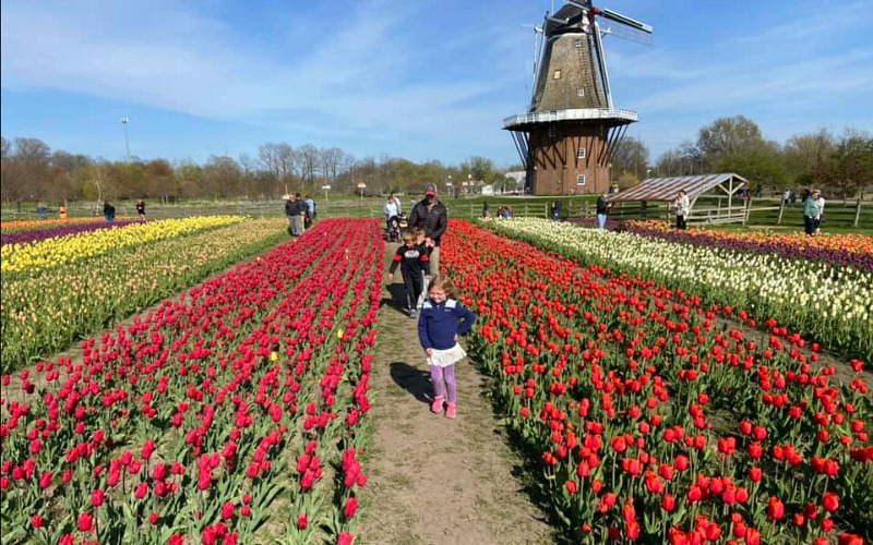 Family visiting Holland Tulip Festival